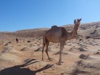 ob_5ed373_wahiba-sand-17