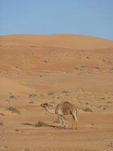 ob_8c8522_wahiba-sand-11