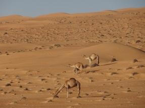 ob_f4182e_wahiba-sand-12