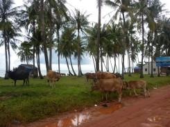 Phu Quoc Island (139) (Copier)